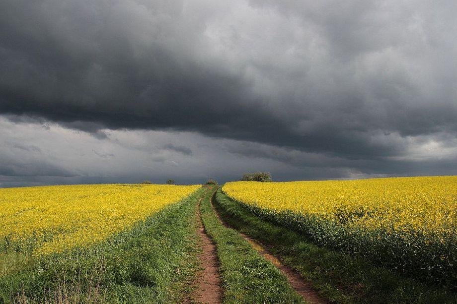 Во Владимирской области снова будет дождливый день