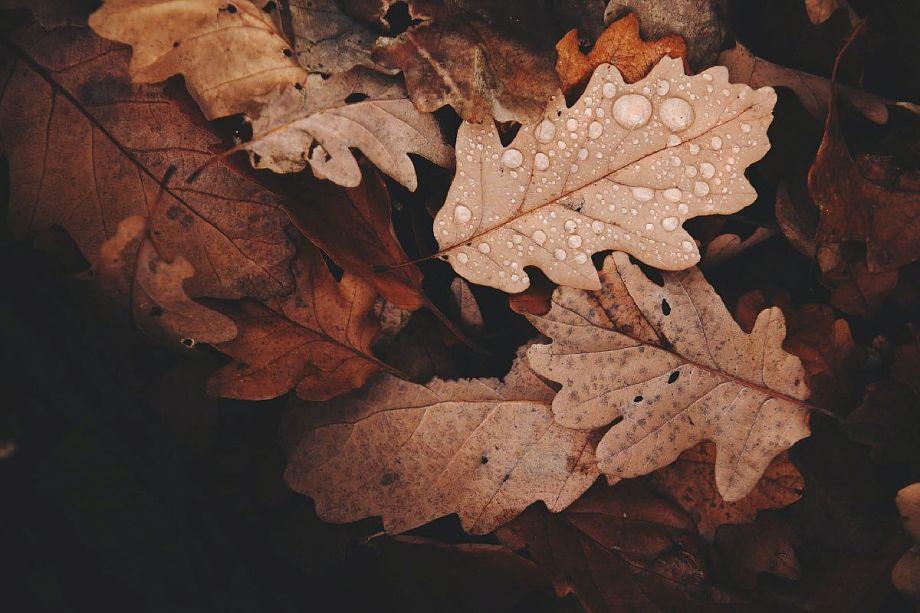 16 сентября во Владимирской области ожидается пасмурная осенняя погода