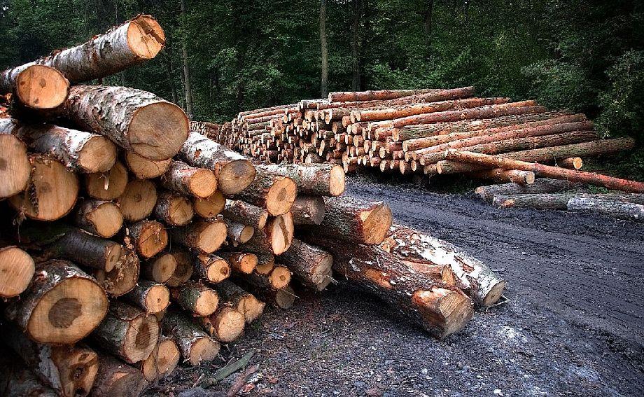 Прокуратура Владимирской области возбудила уголовное дело о незаконной рубке деревьев