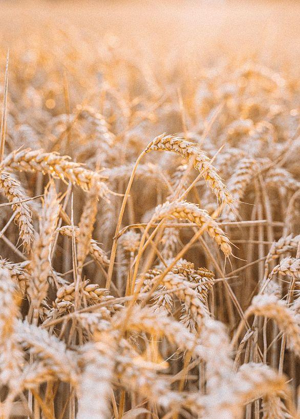 На поддержку сельского хозяйства Владимирской области выделят более 350 миллионов рублей